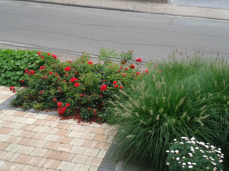 Beet gartengestaltung for Gartengestaltung rosen